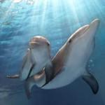 delfineskaland2